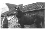 George Frederick Freeman at Sunnycroft Farm, Melton Brand, Doncaster with 'Prince' the horse