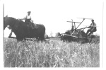 Harvesting at Sunnycroft Farm - Melton Brand